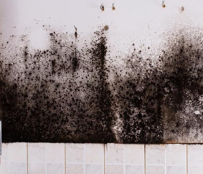 Mold Remediation Tips on Keeping Mold From Spreading