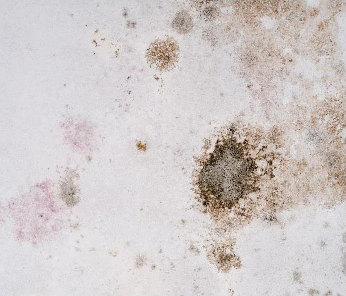 Mold Remediation A Significant Risk To Your Home In Brandon Is High Humidity